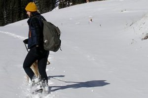 Central Colorado's Most Scenic Snowshoe Hikes
