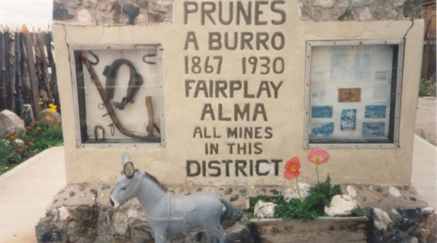 Prunes the Burro of Fairplay, Colorado